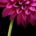 Flower-e7f09135-4473-38c7-82ae-db34a5313779