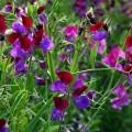 thumb-5-fleurs-de-printemps-faciles-a-cultiver-10314.gif