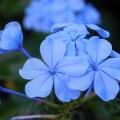flowers-1497285_960_720