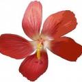 JPEG_example_flower