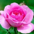 flowers-according-to-seasonal-availability-85-1