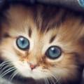 Kitten-fd4124d2-b987-47e2-b6b7-1111986cf3c1