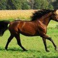Vacances equitation